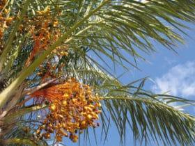 palm-klein